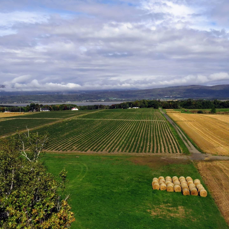 Vue sur les champs de fraises et la Côte de Beaupré