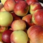 Ma compote de pomme du Québec