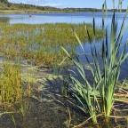 Visiter les marais et tourbières près de Québec