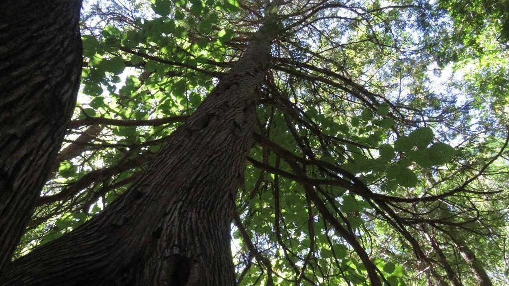 La cime d'un arbre